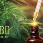 Olejki CBD – wszystko co musisz o nich wiedzieć